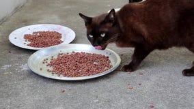 Den svarta katten äter älsklings- mat lager videofilmer