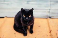 den svarta katten eyes yellow Royaltyfri Fotografi