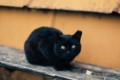 den svarta katten eyes yellow Arkivfoton