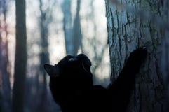 Den svarta katten klättrar ett träd Royaltyfri Fotografi