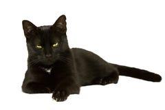 Den svarta katten lägger ner Royaltyfri Bild