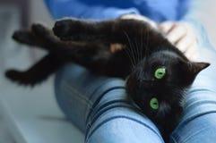 Den svarta katten ligger i händerna av flickan arkivfoto