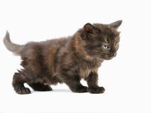 Den svarta katten med att le synar, i att spela position Royaltyfri Bild