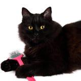 Den svarta katten med en borste i hans tafsar Royaltyfri Fotografi