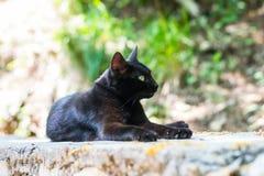 Den svarta katten med gröna ögon som ligger på en sten Royaltyfri Bild