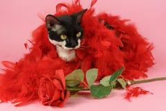 Den svarta katten med steg Royaltyfria Bilder