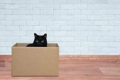Den svarta katten sitter i en ask Mot bakgrunden av en vit tegelstenvägg arkivfoton