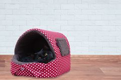 Den svarta katten sitter i ett varmt mjukt hus royaltyfria bilder