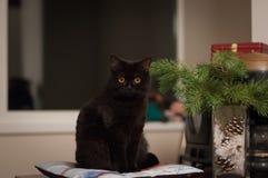 Den svarta katten sitter på kudden royaltyfri foto