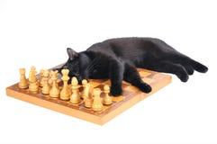 Den svarta katten sover på ett schackbräde med isolerade diagram på vit Arkivfoton