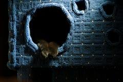 Den svarta katten tafsar Arkivbilder