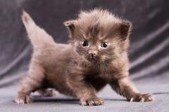 Den svarta kattungen i ett skämtsamt poserar Royaltyfri Foto