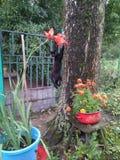 Den svarta kattungen klättrar ett träd arkivbild