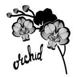 Den svarta konturen förgrena sig orkidéblommor, royaltyfri bild