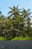 Den svarta sandstranden i Hawaii omgav vid palmträd Royaltyfri Fotografi