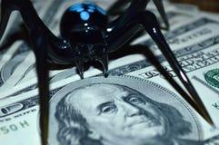 Den svarta spindeln sitter på hundra dollarräkningar i svartvita signaler arkivbilder