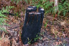 Den svarta stubben Royaltyfria Foton