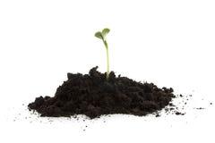 den svarta trädgårds- stapelväxten smutsar barn royaltyfri fotografi