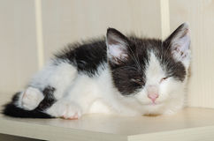 den svarta vita katten sover Arkivfoto