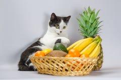 Den svartvita feta katten lyftte tafsar över en korg av tropiska frukter fotografering för bildbyråer