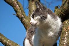 Den svartvita katten är på trädet och ser omkring royaltyfria foton