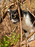 Den svartvita katten i skogen Arkivbild