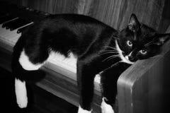 Den svartvita katten ligga på att dingla för piano som är hans, tafsar arkivfoton