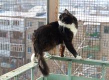 Den svartvita katten på balkongen Royaltyfri Bild