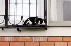 den svartvita katten ser ut fönstret till och med metallskyddsgallret royaltyfria bilder