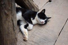Den svartvita katten som ligger på golvet, band för ögonen på på ett trägolv Arkivfoto