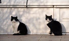 Den svartvita vuxna människan kopplar samman katter Arkivfoto
