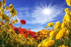 Den sydliga varma solen Fotografering för Bildbyråer
