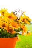 den synade svarta buketten blommar susan yellow Royaltyfri Fotografi