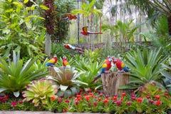 Den syntetiska papegojan som trädgårds- garnering i Nong Nooch den tropiska trädgården i Pattaya, Thailand royaltyfri fotografi
