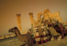 DEN SYRIEN PALMYRAROMAREN FÖRDÄRVAR Arkivfoto