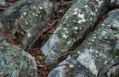Den täckte detaljen av laven vaggar i den australiska busken Arkivfoto