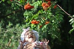 Den tandlösa caucasianen behandla som ett barn flickan som skrattar på rönnbäret i hennes händer för fader` s arkivbilder