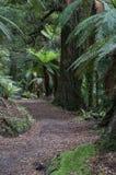 Den Te Urewera National Park skogen går Royaltyfri Foto