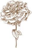 den tecknade handen steg Royaltyfria Bilder