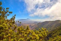 Den Teide vulkan bak träd i Tenerife Arkivbild