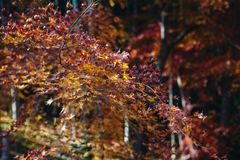 Den Tenryu-ji templet och Sogenchi arbeta i trädgården med den färgrika höstsäsongen royaltyfri foto