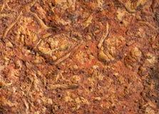 Den texturerade yttersidan av jord av kalkstenen för röd färg Royaltyfria Foton