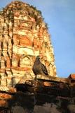 Den thailändska duvan på den forntida thailändska templet fördärvar Arkivfoton