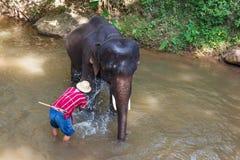 Den thailändska elefanten var tar ett bad med mahouten Royaltyfri Foto