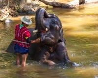 Den thailändska elefanten var tar ett bad med mahouten (elefantchauffören, ele Royaltyfri Fotografi