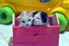 Den thailändska kattungen är härlig Arkivfoto