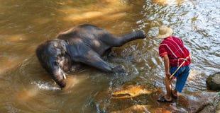 Den thailändska unga elefanten var tar ett bad med mahouten Arkivbild