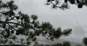Den Tid schackningsperioden av sörjer trädfilialer och tjock dimma bak dem