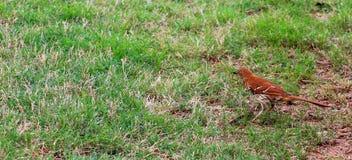 Den tidiga fågeln avmaskar sent Royaltyfria Bilder