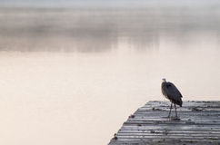 Den tidiga fågeln fångar fisken Royaltyfri Foto